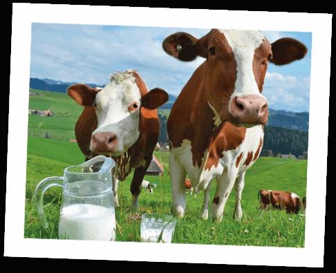 Que nos hace diferentes: leche fresca